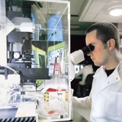Distrofia muscolare: trial clinico testa sull'uomo nuova terapia farmacologica