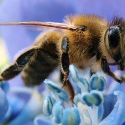 Allergia a veleno di vespe e api, rischi e precauzioni sotto il sole