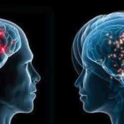 Cervello alto e cervello basso: rivelazioni sorprendenti su come pensiamo