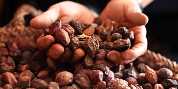 Olio d'Argan, il toccasana per l'inverno